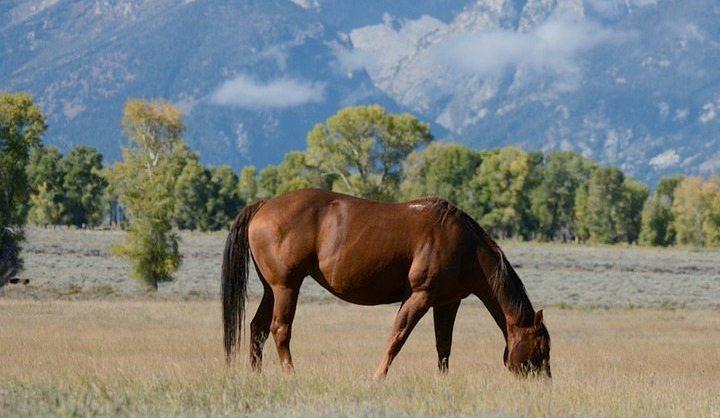 Paardrijden in zwitserland